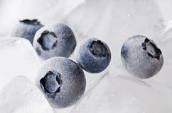 冻结的蓝莓 库存图片
