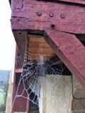 冻结的蜘蛛网在早期的冬天早晨上在法国 免版税图库摄影