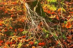 冻结的蜘蛛网 图库摄影
