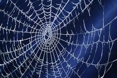 冻结的蜘蛛网 免版税库存图片