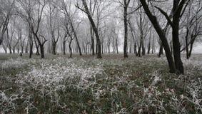 冻结的被迷惑的森林 免版税库存照片