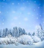 冻结的风景结构树冬天 图库摄影