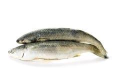 冻结的2条鱼 免版税库存照片