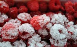冻结的raspberrys 图库摄影