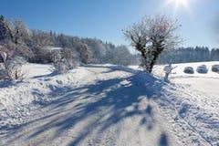 冻结结构树和路,极大的影子 库存图片