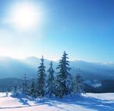冻结结构树 免版税库存照片