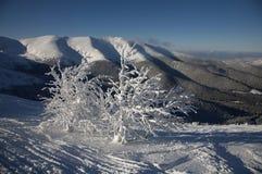 冻结结构树 免版税图库摄影