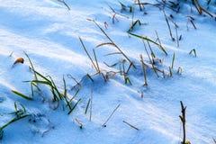 冻结草 库存图片