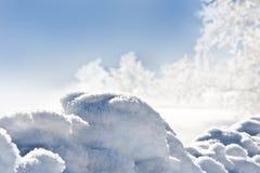 冻结随风飘飞的雪结构树 免版税库存图片