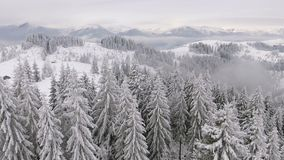 冻美丽的树 冬天传说 敬佩的风景 雄伟山 股票录像