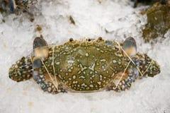冻蓝色精神食粮螃蟹 库存照片