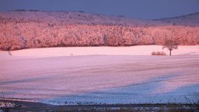 冻领域和树在冷的清楚的冬天 库存照片