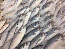 冻鱼在市场上,排序鱼 免版税库存图片