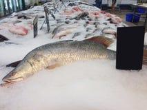 冻鱼在市场上,排序鱼 免版税库存照片