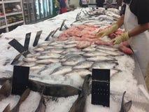 冻鱼在市场上,排序鱼 库存图片