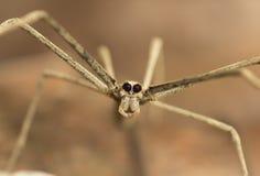 净铸件蜘蛛 免版税图库摄影