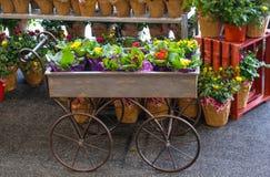 准备在春天-充分庭院无盖货车在盆的玫瑰前面架子的盆的花-选择聚焦 免版税库存图片