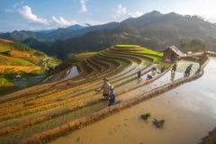 准备在水季节的Hmong的农夫移植, Mu Cang柴,越南 库存图片