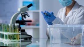 准备女性的生物学家测试在实验动物的医学,疫苗研制 免版税库存图片