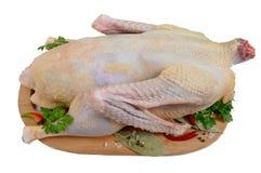 准备好一只未加工的鹅烹调在白色背景隔绝的切板 图库摄影