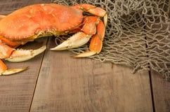 准备好的太平洋大蟹烹调 免版税图库摄影