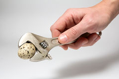 准备好的板钳击碎鸡蛋 库存照片