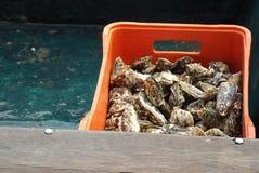 准备好的牡蛎被烹调 库存图片