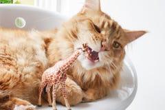 准备好的猫嚼玩具长颈鹿 免版税库存照片
