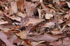 准备好的秋叶落 库存图片