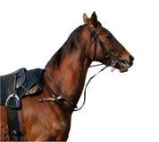 准备好的骑师 免版税库存照片