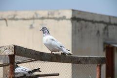 准备好的鸟飞行在空气 库存图片