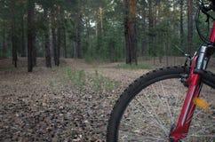 准备好的登山车努力去做在一串足迹在森林在日出 库存照片