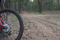 准备好的登山车努力去做在一串足迹在森林在日出 免版税库存图片