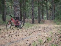 准备好的登山车去在一串足迹在森林 免版税库存图片