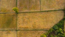 准备好稻田的鸟瞰图收获与唯一树在领域中间 免版税图库摄影