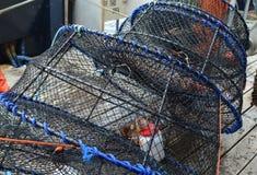 准备好空的虾的罐设置 库存照片
