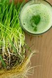 准备好绿色有机麦子草的汁喝 库存图片