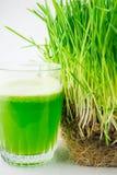准备好绿色有机麦子草的汁喝 免版税库存照片