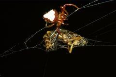 准备牺牲者的蜘蛛 免版税库存照片