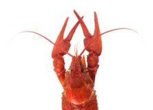 准备的大小龙虾 库存照片