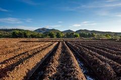 准备种植农作物菜。 库存图片