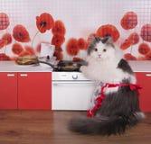 准备薄煎饼的猫主妇在一个小厨房里 免版税图库摄影