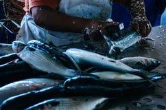准备鱼卖 图库摄影