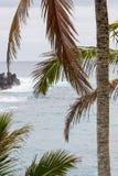 凉爽的微风吹的可可椰子在夏威夷 库存图片