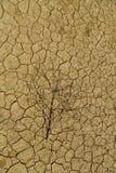 凋枯的分支说谎从热的破裂的地球上 免版税库存图片