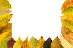 凋枯的叶子半框架的季节性安排 免版税库存图片