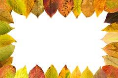 凋枯的叶子的季节性安排完成框架 免版税库存图片