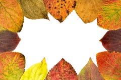 凋枯的叶子的季节性安排完成框架 免版税库存照片