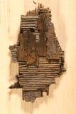 凋枯的木头片断  免版税库存照片