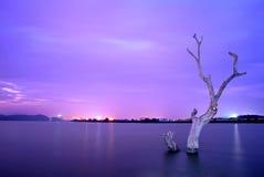 凋枯的树 免版税库存照片